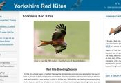 Yorkshire Red Kites
